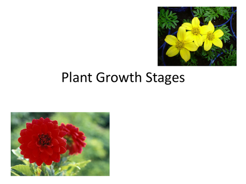 Plant Growth Satges