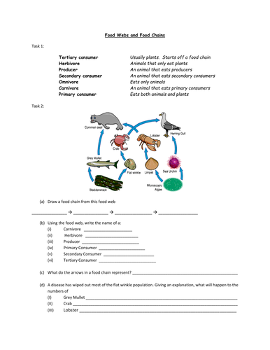 Worksheets Food Chain And Food Web Worksheet food webs and chains worksheet by alexjfirth teaching resources tes