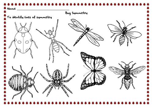 Line Art Ks2 : Bug symmetry by renosparks teaching resources tes