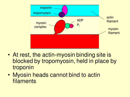 how to learn the sliding filament theory