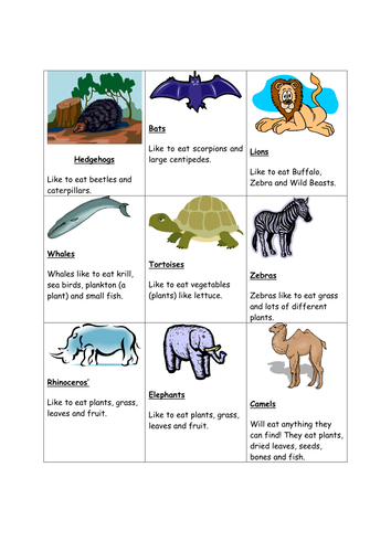 Animal and Plant Sorting Cards by pumpkinsoup88 - Teaching ...