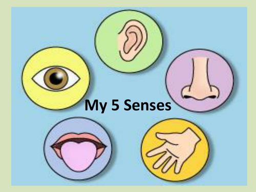 Image result for senses ks1