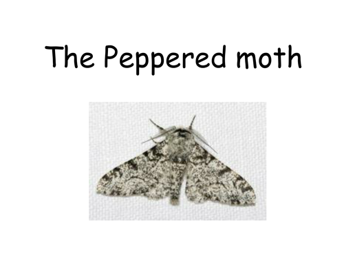 BTEC Applied Science The Peppered Moth by fiendishlyclever – Peppered Moth Simulation Worksheet
