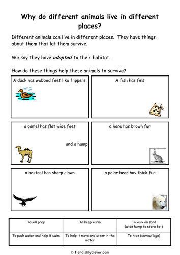 Animal Adaptations Worksheets : Animal adaptations by diannadd teaching resources tes