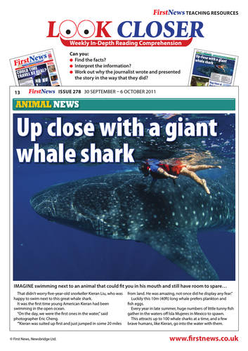 Look Closer: 'Up Close with a Whale Shark' News Report