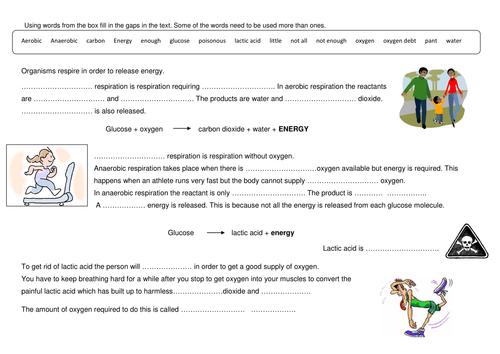 {Anaerobic respiration by Ewula Teaching Resources Tes – Aerobic Respiration Worksheet