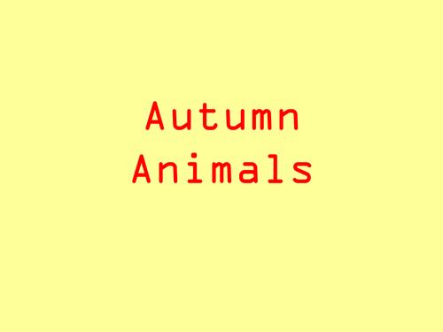Autumn Animals/Woodland Animals