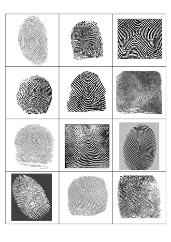 fingerprint sort by pinkhelen teaching resources