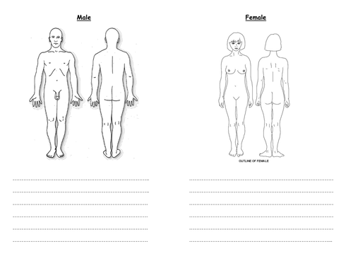 Differentiated puberty body changes worksheets by