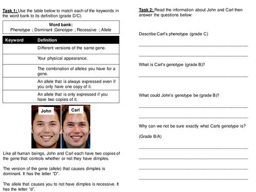 Genetic cross worksheet (mid ability)