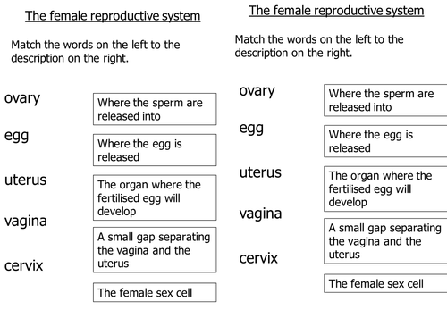 KS3 Reproduction: The Female Reproductive System 2 by l.absalom ...