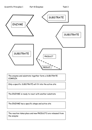 Worksheet Enzyme Worksheet ks4 enzymes by l absalom teaching resources tes