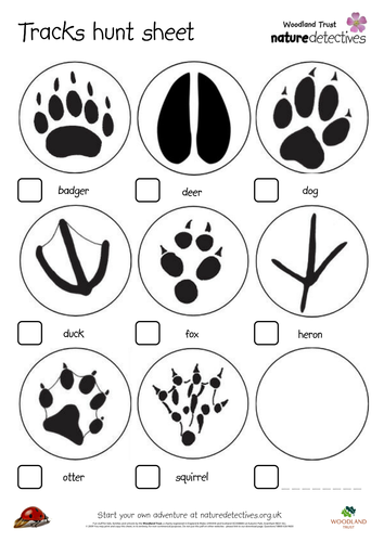 animal tracks worksheet photos roostanama. Black Bedroom Furniture Sets. Home Design Ideas