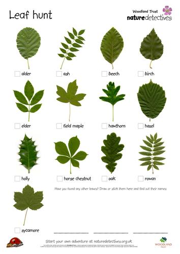 Leaf Hunt by   UK Teaching Resources   TES