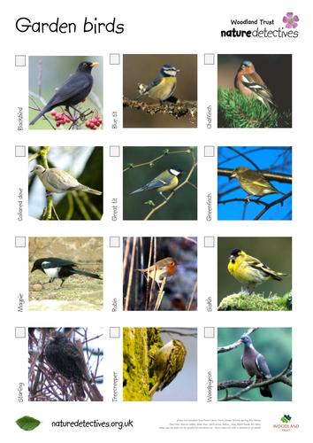 Garden bird hunt