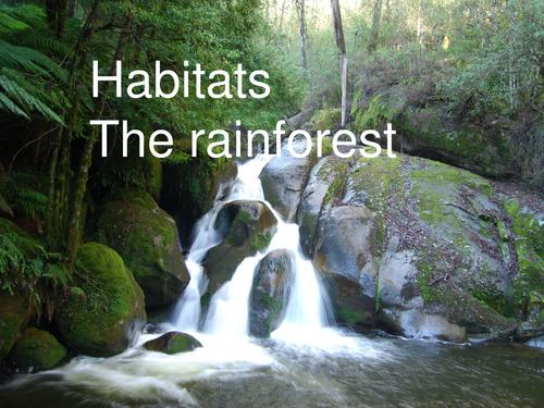 Habitats  The rainforest music