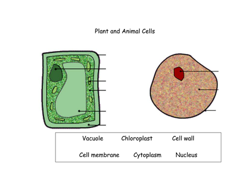 Plant And Animal Cells By Funforester Teaching Resources