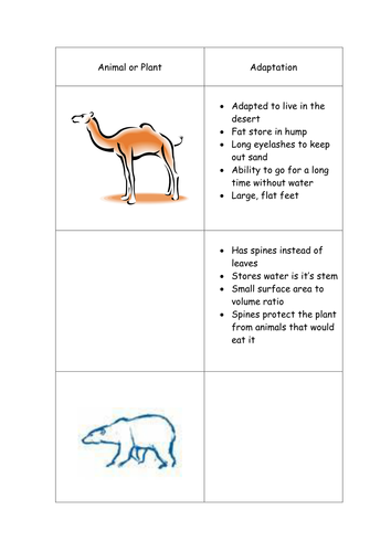 Adaptation Worksheet By Funforester Teaching Resources