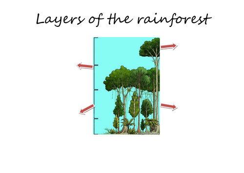 Printables Layers Of The Rainforest Worksheet rainforest layers by claire494 teaching resources tes