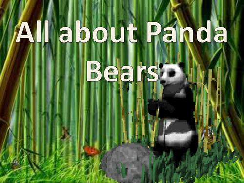 All About Panda Bears