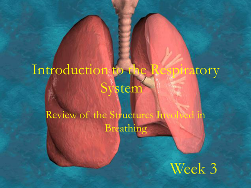 Structure of the respiratory system by jonnymac20 teaching structure of the respiratory system by jonnymac20 teaching resources tes ccuart Image collections
