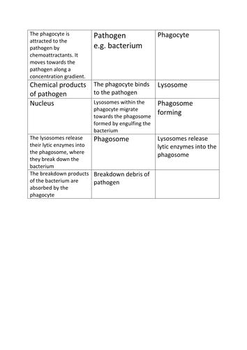 Phagocytosis cut and stick