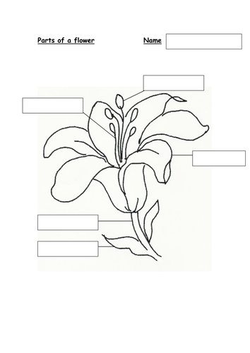 Parts of Flower diagram | Teaching Resources