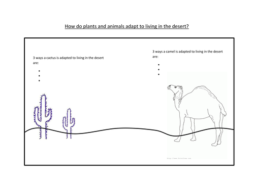 Hot deserts animals adaptations by Sarah ColesSmith Teaching – Plant Adaptations Worksheet