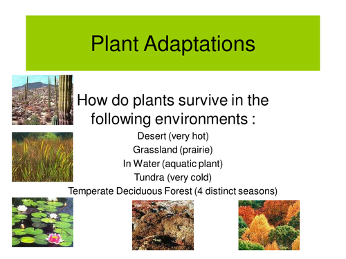Plant Structure and Adaptations - YouTube