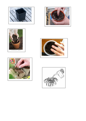 Planting A Seed Cut And Stick Activity By Rachyben Teaching
