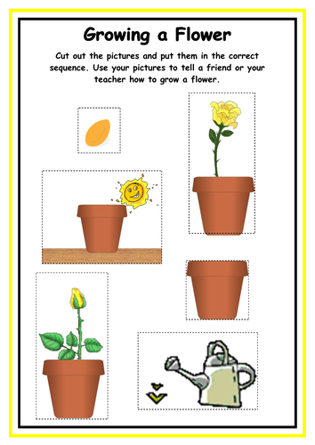 growing a flower sequencing sheet by kmed2020 teaching resources tes. Black Bedroom Furniture Sets. Home Design Ideas