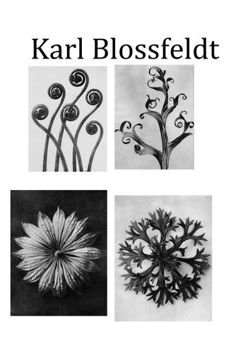 Karl Blossfeldt Printout