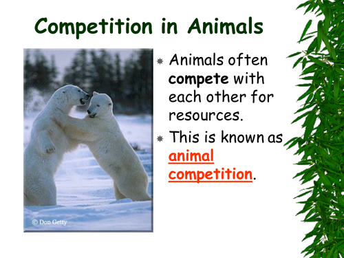 Competition in animals ppt | Teaching Resources