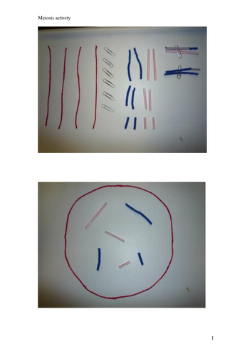 Chromosome Assortment Tactile Activity