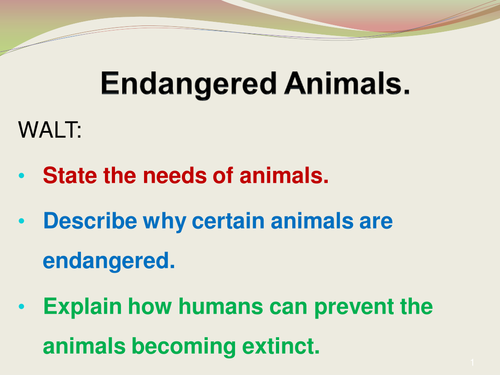 environment and animals