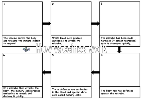 Vaccination flow chart by cathb1975 Teaching Resources Tes – Immune System Worksheets