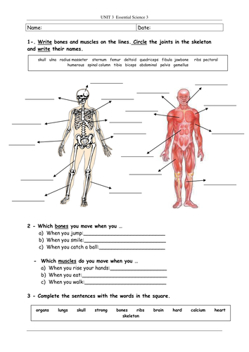Bones And Muscles By Pelusilla Teaching Resources Tes