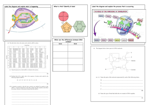 Transcription & Translation revision summary by Bott - Teaching ...