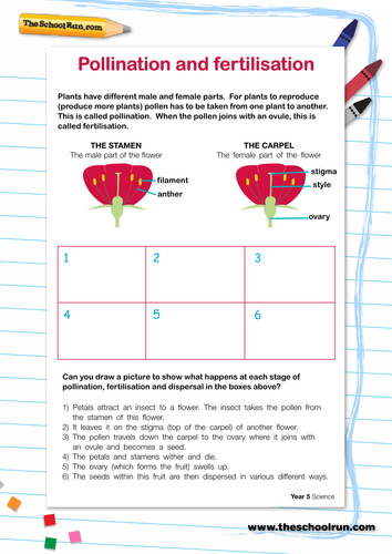 Pollination And Fertilisation By Ksmith88 Teaching Resources Tes