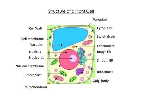 Plant cell structure powerpoint   Teaching Resources