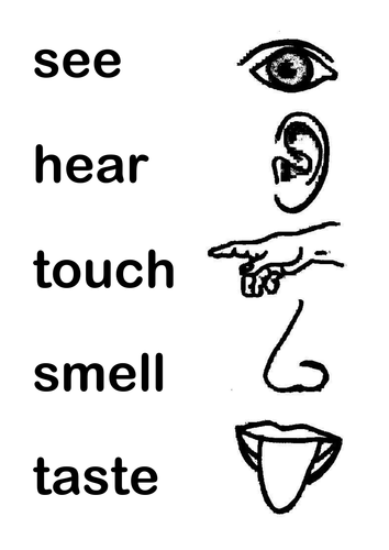 Five Senses By Susanfourie7 Teaching Resources Tes