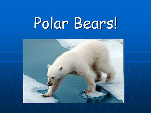 Polar Bear Facts Presentation By Katie Morag Teaching