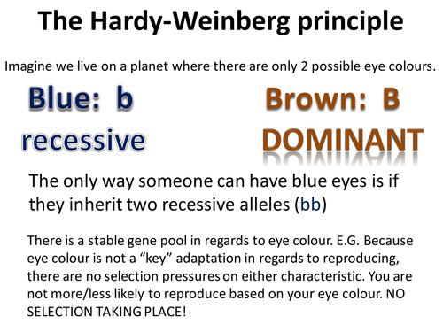 Hardy_Weinberg