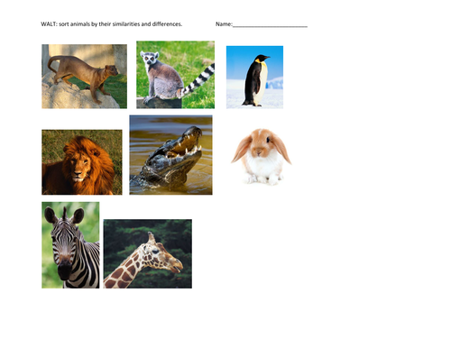 Herbivore Or Carnivore By Anoakes1 Teaching Resources Tes