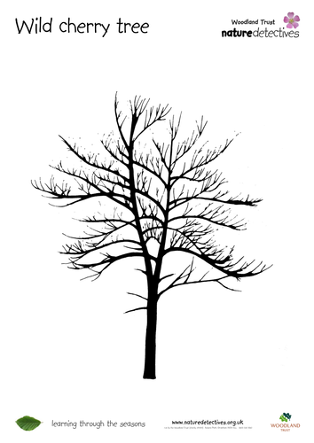 Trees - Tree Outlines