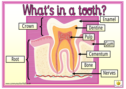 Whats In A Tooth By Bevevans22 Teaching Resources Tes