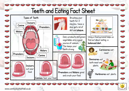 Teeth And Eating Double Sided Fact Sheet 6182619 on Teeth Labelling Worksheet