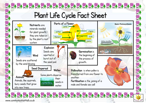 plant life cycle double sided fact sheet by bevevans22 teaching resources. Black Bedroom Furniture Sets. Home Design Ideas