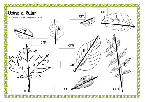 Drawing Lines In Cm Worksheet : Measuring leaves by renosparks teaching resources tes