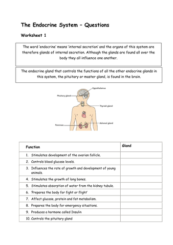 Glands And Hormones In The Endocrine System By Sharley23